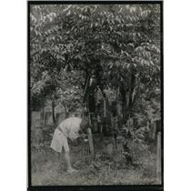 1920 Press Photo worker tapping lacquer in a Lacquer Tree Orchard in Japan