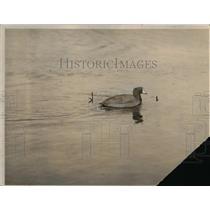 1923 Press Photo The snobbish ducks made Ali, the lonely duck felt alone