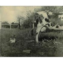 1935 Press Photo Taking precaution a farmer ties the cow's tail to a bucket.