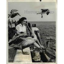 1940 Press Photo St. Petersburg, Florida Pelicans - nee41849