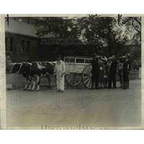 1926 Press Photo Oxen Pull Charles Pritchard Milk Wagon, Harvard University