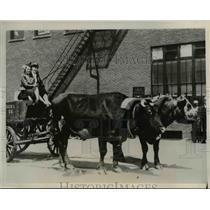 1937 Press Photo Oxen Pulling Cart, Sioux City Iowa Stockyards - nee42264