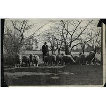 "1932 Press Photo Flock of Sheep Led by Lure ""Kitchoo,"" Lowell Massachusetts"