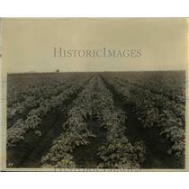 1927 Press Photo Rich Black Muck of the Everglades  - nee65192