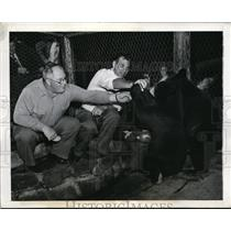 1943 Press Photo Bear Mountain NY coach Steve Owen, Tuffy Leemans 7 bear cubs
