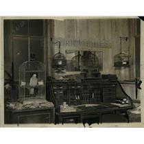 1923 Press Photo Parrots, Parakeet, Canaary Murdered Frederick Schnieders Office