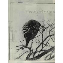 1929 Press Photo The grouse in zero weather - nee71873