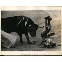 1975 Press Photo Matador Raul Sanchez tip over by bull at Madrid Spain
