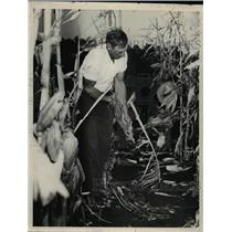 1938 Press Photo Ted Balko Cornhusking Champion Dill Rapids - nee78136