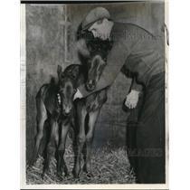 1939 Wire Photo Twin fillies born on George Hendrie farm near Hamilton