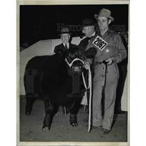 1941 Press Photo Chicago Loyal Alumnus IV an Aberdeen Angus entered by Purdue
