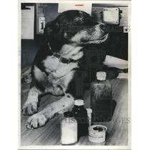 1937 Press Photo George Dog, Firedog-mascot of Station 29, Rescue Squad 3