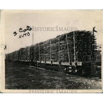 1919 Press Photo Large Shipments of Christmas Trees May be Used for Wood