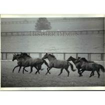 1985 Press Photo Horses romp at the Hurstland Farm in Woodford county Kentucky.