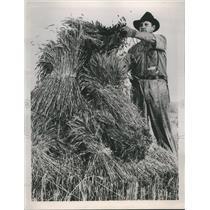 1935 Press Photo Oats Oklahoma Farm - RRR60749