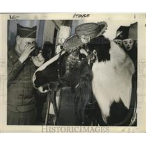 1948 Press Photo Sergeant McLean Takes Photo of Horse, Mardi Gras, New Orleans