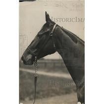 1918 Press Photo Racehorse Miss Harris M ready for a race - net28250