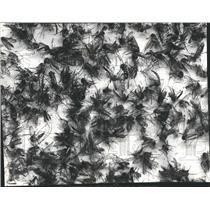 19978 Press Photo Disease Malaria Mosquito Vital Public