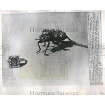 1962 Press Photo Savannah Beetle Chain Yucatan Vogue