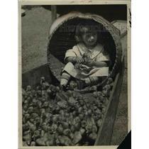 1925 Press Photo A small girl & a hundred baby ducks at Los Angeles CA