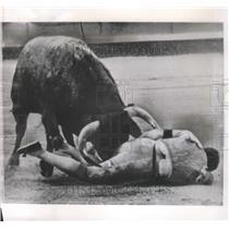 1962 Press Photo Antonio Ordonez-Gored Matador Lays in Pain in Salamanca, Spain