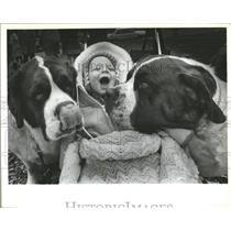 St. Bernard Dog Breed