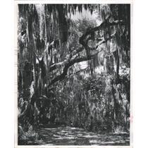 1963 Press Photo Trail Southwest Shore Lake Maggiorie