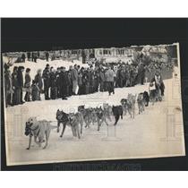 1973 Press Photo World Champion Sled  Dog Derby