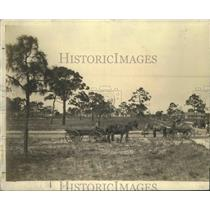 Press Photo Street Scene with Horse Pulled Carts - ftx01782