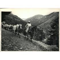 1991 Press Photo Pack Horses in the Wilderness of Wyoming - mja55954