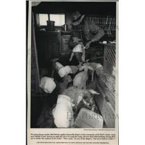 1993 Press Photo Bob Britain Wyoming Sheep Rancher Applies Diapers to Flock