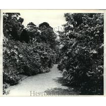 1942 Press Photo Magnolia Gardens, Charleston, South Carolina - mja62177