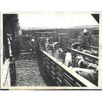 1934 Press Photo Chicago Stock Yards Strike