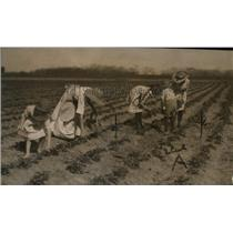 1920 Press Photo Strawberry Picking - neo10722