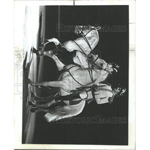 1983 Press Photo Lipizzan Horses Vienna Austria - RRX90525