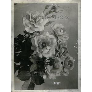 1942 Press Photo Floribunda Roses Garden Picture Dept - RRU33501