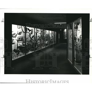 1982 Press Photo Bird hallway in basement of Cleveland Museum Nat'l History