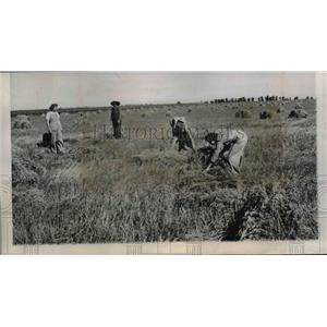 1944 Press Photo Women to supplement remaining man power at Harvest Time.