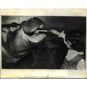 1972 Press Photo Kellu Kronenberg with a hippo at Niabi Xoo in Moline Illinois