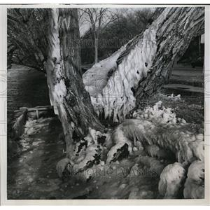 1957 Press Photo Trees Encrusted With ice Formed by Frozen Spray From Water