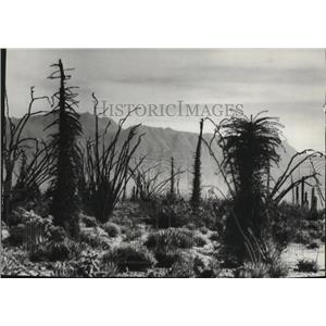 1973 Press Photo Baja, California has many unique species unlike any where else