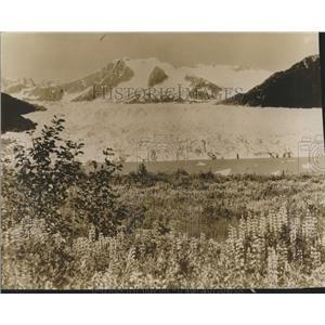 1940 Press Photo Alaska Landscape-Fields of Flowers Watered by Glaciers