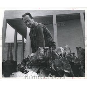 1971 Press Photo Celestino Garcia Harvests Cabbages at the Civic Center, Houston