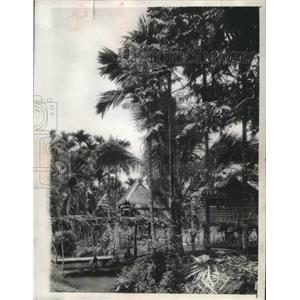 1942 Press Photo A Woman Washes Her Clothes in a Jungle Village in Luzon, PH