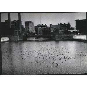 1977 Press Photo Hundreds of ducks land on the Milwaukee River, Milwaukee