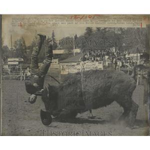 1974 Press Photo Bill Evans Disc Jockey Rides Buffalo - RRX84205
