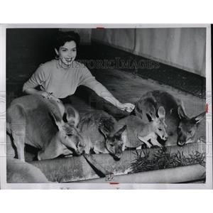 1955 Press Photo Ann Miller American Actress - RRW00517