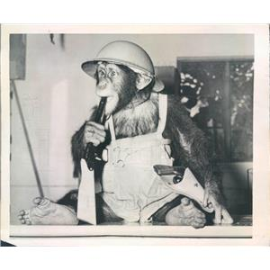 1944 Press Photo NYC Movie Star Chimpanzee Two-Gun-Dan - ner23767