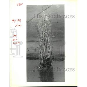 1991 Press Photo Marsh grass to be planted along the shoreline with little fence