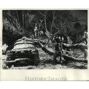 1964 Press Photo Adolph J. Greensberg's car attacked by a tree in heavy snow.